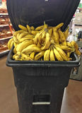 Discarded Old Bananas in trash bin at Grocery Stor Stock Photography
