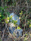 Discarded old car battery falling apart in hedge. Enviromental p Stock Images