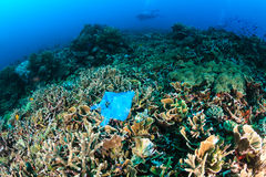 Discarded plastic bag on a coral reef. Manmade Pollution - a discarded plastic bags lies entangled on a tropical coral reef while SCUBA divers swim past in the royalty free stock photos