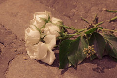 Discarded Roses Royalty Free Stock Photography