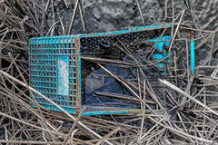 Discarded Shopping Cart in Swamp Royalty Free Stock Photography