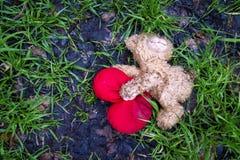 Discarded teddy bear Stock Image
