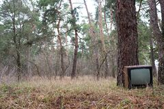 Discarded television set in the pin forest royalty free stock images