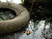 Discarded Tire. A tire dumped into a lake Royalty Free Stock Images