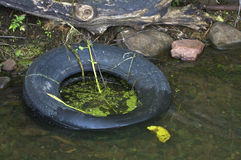 Discarded tire in water Stock Photo