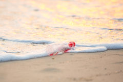 Discarded water bottle laying on a beach. Stock Photos