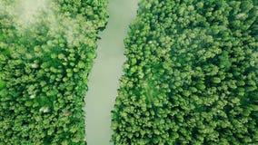 Discendendo attraverso le nuvole alla foresta selvaggia, concetto di caduta non gestita veloce video d archivio