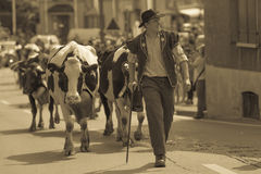 Discesa Blonay Svizzera del bestiame Immagini Stock Libere da Diritti