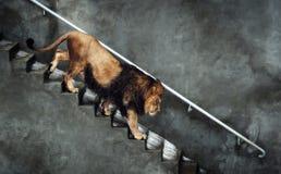 Discesa del leone Immagine Stock