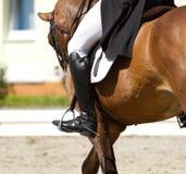 disciplindressage klädde den olympic realistiska sporten för den rid- för formalitetlekhästen bilden för skicklig ryttarinna Arkivfoto