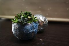 Disco ball with succulent floral moon stock photo