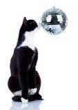 Disco cat Royalty Free Stock Image