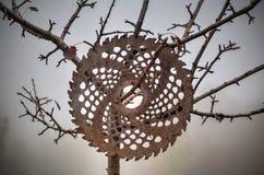 Disco circular enganchado en un árbol imágenes de archivo libres de regalías