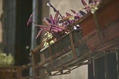 Disco con las flores de la lila Fotos de archivo
