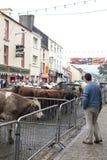 Disco da venda dos rebanhos animais da rua justo Foto de Stock Royalty Free