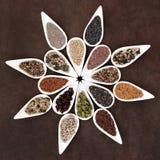 Disco de la comida de la semilla Imágenes de archivo libres de regalías