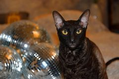 Disco mirror balls with a charming cat stock photography