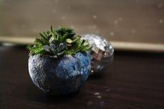 Discoball mit saftigem Blumenmond stockfoto