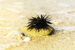Discolo sulla roccia della spiaggia in acqua bassa fotografie stock libere da diritti