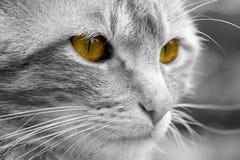 Discoloured cat Stock Image