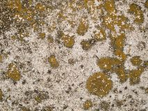 Discoloured Concrete  Stock Photography