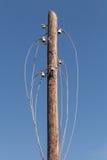 Disconnected elkrafttrådar på träpylonen arkivfoto