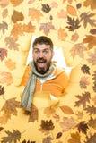 Discontos do outono na roupa Venda do roupa interior do ` s dos homens O homem farpado est? preparando-se para a venda do outono  fotografia de stock royalty free