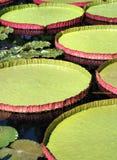 Discos del agua de Victoria Imagenes de archivo