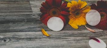 Discos del algodón, esponjas para quitar maquillaje en el fondo en flores Las manos femeninas de la belleza con un disco del algo fotos de archivo