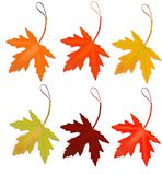 Discount autumn maple leaves Royalty Free Stock Photography