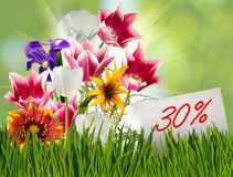Discount for sale, 30 percent discount, beautiful flowers tulips in the grass close-up. Discount for sale, 30 percent discount, beautiful flowers tulips in the Stock Photography