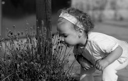 Discover the world. A girl smells on lavender Royalty Free Stock Photos