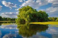 A beautiful lake in Danube Delta, Romania. Discovering Danube Delta in a Canoe. Water channel, river in Danube delta, Romania - Image royalty free stock photos
