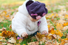 Discovering yellow leaves Stock Images