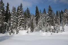 Discovery Canadian Winter Admire Landscapes. Canadian Winter is not a joke ! an open landscape with beautiful big snowy firs trees, snow in quantity. Hiking in stock images