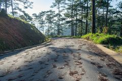 Discovery in dalat city, vietnam, hiking, climbing, walking with friends in the pine forest part 6. Discovery in dalat city, vietnam, hiking, climbing, walking royalty free stock photography