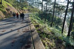 Discovery in dalat city, vietnam, hiking, climbing, walking with friends in the pine forest part 5. Discovery in dalat city, vietnam, hiking, climbing, walking royalty free stock image