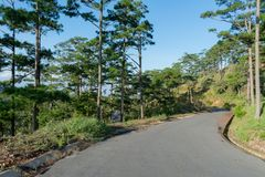 Discovery in dalat city, vietnam, hiking, climbing, walking with friends in the pine forest part 4. Discovery in dalat city, vietnam, hiking, climbing, walking stock images
