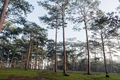 Discovery in dalat city, vietnam, hiking, climbing, walking with friends in the pine forest part 10. Discovery in dalat city, vietnam, hiking, climbing, walking stock photo