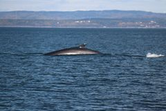 Discovery of Quebec landscapes with Whales Royalty Free Stock Photos