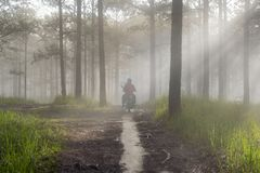 Discovery travel in the trail pine forest, vietnam. Background with magic sunrays, light, dense fog and fresh air part 15. Discovery travel in the trail pine stock photography