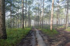 Discovery travel in the trail pine forest, vietnam. Background with magic sunrays, light, dense fog and fresh air part 14. Discovery travel in the trail pine stock images