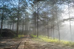 Discovery travel in the trail pine forest, vietnam. Background with magic sunrays, light, dense fog and fresh air part 18. Discovery travel in the trail pine stock photo