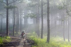Discovery travel in the trail pine forest, vietnam. Background with magic sunrays, light, dense fog and fresh air part 16. Discovery travel in the trail pine stock image
