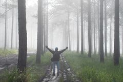 Discovery travel in the trail pine forest, vietnam. Background with magic sunrays, light, dense fog and fresh air part 6. Discovery travel in the trail pine stock images