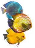 Discus Royalty Free Stock Images