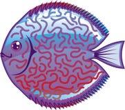Discus Aquarium fish vector Stock Photos