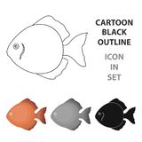 Discus fish icon cartoon. Singe aquarium fish icon from the sea,ocean life cartoon. Stock Images