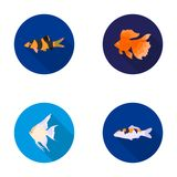Discus, gold, carp, koi, scleropages, fotmosus.Fish set collection icons in flat style vector symbol stock illustration Stock Photography