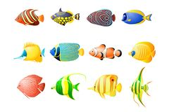 Pack aquarium tropical fish stock illustration